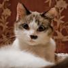 بازل صورة القط
