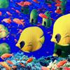 بازل السمك الملون