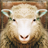 بازل خروف العيد