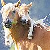 بازل صورة الخيول